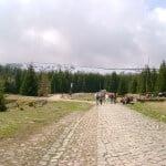 Wybrukowany szlak niebieski tuż po opuszczeniu Karpacza